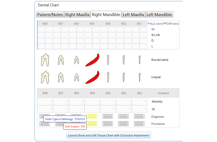 Dental Chart - Canine Deciduous 804 CCF,XSS NEW