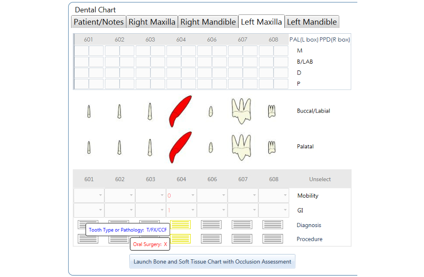 Dental Chart - Feline Deciduous 604 CCF, X NEW