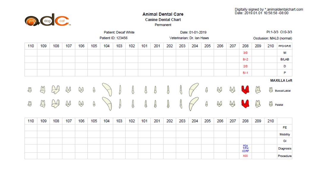 Dental Chart 2